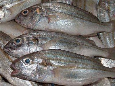 تفسير حلم رؤيا اكل السمك ني