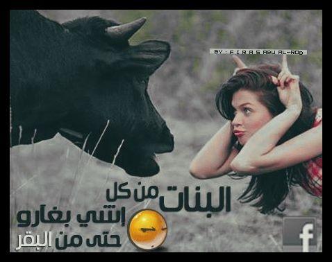 البنات من كل شي بغارن حتى من البقرة