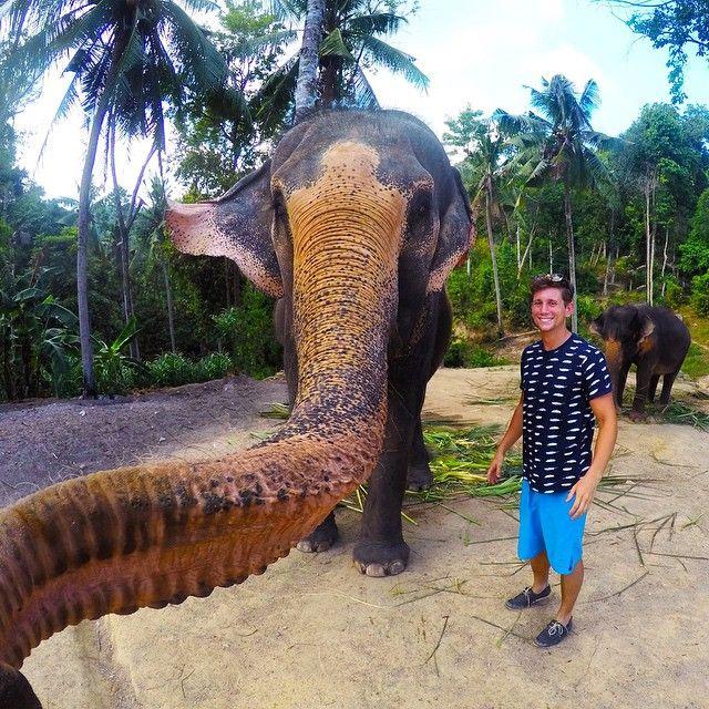 فيل يلتقط سيلفي افضل و اكثر احترافا من البشر