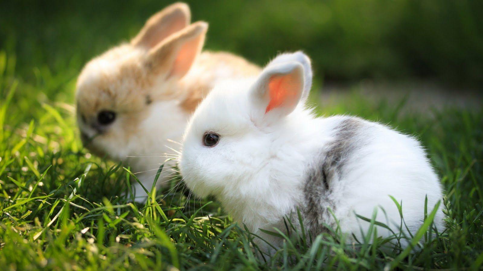 الارنب في المنام تفسير حلم ارنب في الحلم